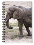 Majestic Elephant  Spiral Notebook