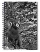 Majestic In Jasper Black And White Spiral Notebook