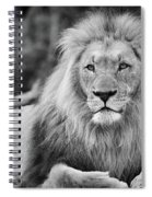 Majestic Male Lion Black And White Photo Spiral Notebook