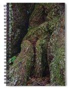 Majestic Tree Trunk Spiral Notebook