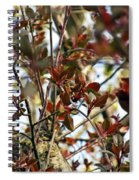 Make An Eternal Spring Spiral Notebook