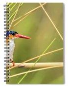 Malachite Kingfisher On Watch Spiral Notebook