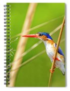 Malachite Kingfisher On The Hunt Spiral Notebook