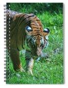 Malayan Tiger # 2 Spiral Notebook
