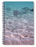 Maldives School Of Tropical Fish Spiral Notebook