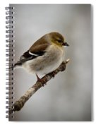 Male American Golden Finch Spiral Notebook