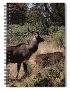 Male And Female Mountain Nyala Spiral Notebook