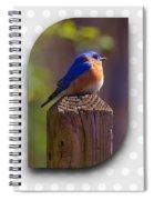 Male Bluebird Spiral Notebook