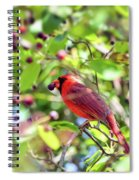 Male Cardinal And His Berry Spiral Notebook