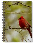 Male Cardnial Spiral Notebook