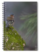 Male Common Chaffinch  Spiral Notebook