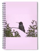 Male Costa's Hummingbird With Mauve Spiral Notebook