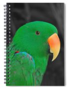 Male Eclectus Spiral Notebook