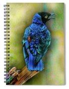 Male Fairy Bluebird Spiral Notebook