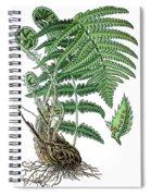 male fern, Dryopteris filix-mas Spiral Notebook
