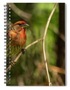 Male Finch In Red Plumage Spiral Notebook
