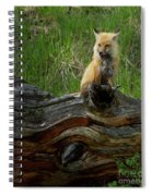 Male Fox-signed   #3569 Spiral Notebook