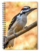 Male Hairy Woodpecker Spiral Notebook