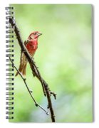 Male House Finch Out On A Limb Spiral Notebook