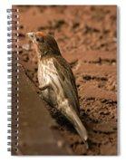 Male House Finch V10 Spiral Notebook