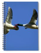 Male Mergansers In Flight Spiral Notebook