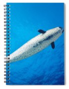 Male Narwhal Spiral Notebook
