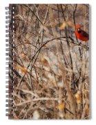 Male Northern Cardinal Spiral Notebook