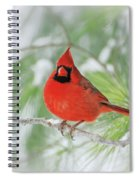 Male Northern Cardinal In Winter - 2 Spiral Notebook