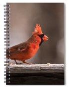 Male Northern Cardinal Winter New Jersey  Spiral Notebook