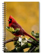 Male Northern Red Cardinal Spiral Notebook