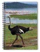 Male Ostrich Spiral Notebook