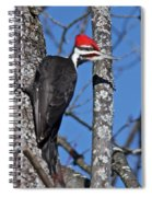 Male Pileated Woodpecker 6340 Spiral Notebook