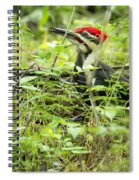 Male Pileated Woodpecker On The Ground No. 2 Spiral Notebook