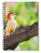 Male Red-bellied Woodpecker Spiral Notebook