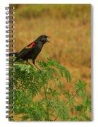 Male Red-winged Blackbird Singing Spiral Notebook