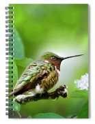 Male Ruby-throated Hummingbird At Rest Spiral Notebook