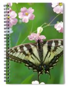 Male Tiger Swallowtail 5416 Spiral Notebook