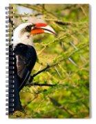 Male Von Der Decken's Hornbill Spiral Notebook