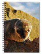 Malibu California Baby Sea Lion Spiral Notebook
