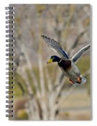Mallard Approach Spiral Notebook