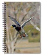 Mallard Approach Spiral Notebook