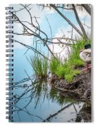 Mallard At Silver Lake Spiral Notebook
