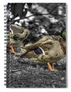 Mallard Duck A4 Spiral Notebook