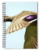 Mallard In Flight . 40d5450 Spiral Notebook