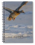 Mallard Landing Over Ice Spiral Notebook