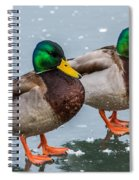 Mallards On Ice Spiral Notebook