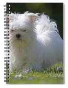 Maltese And Daisy Spiral Notebook