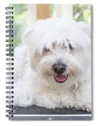 Maltese Dog Is Laying Next To Pile Of Hair Spiral Notebook