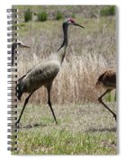 Mama And Two Juvenile Sandhill Cranes Spiral Notebook