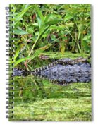 Mama Gator With Babies Spiral Notebook